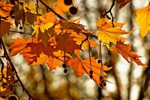 есен, есента, през октомври