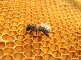 мед, пчеларство, програма
