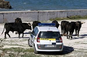 bikove