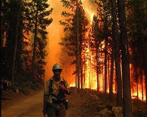 pojari, горски пожар