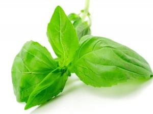 растения лек болести