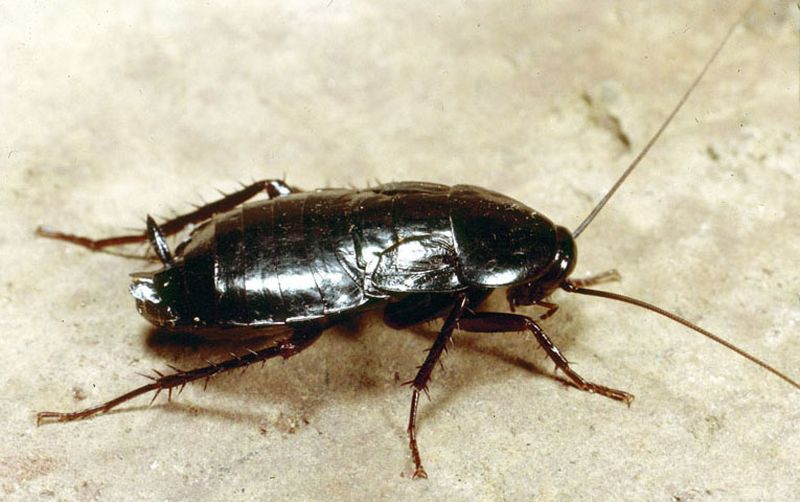 борба с хлебарката